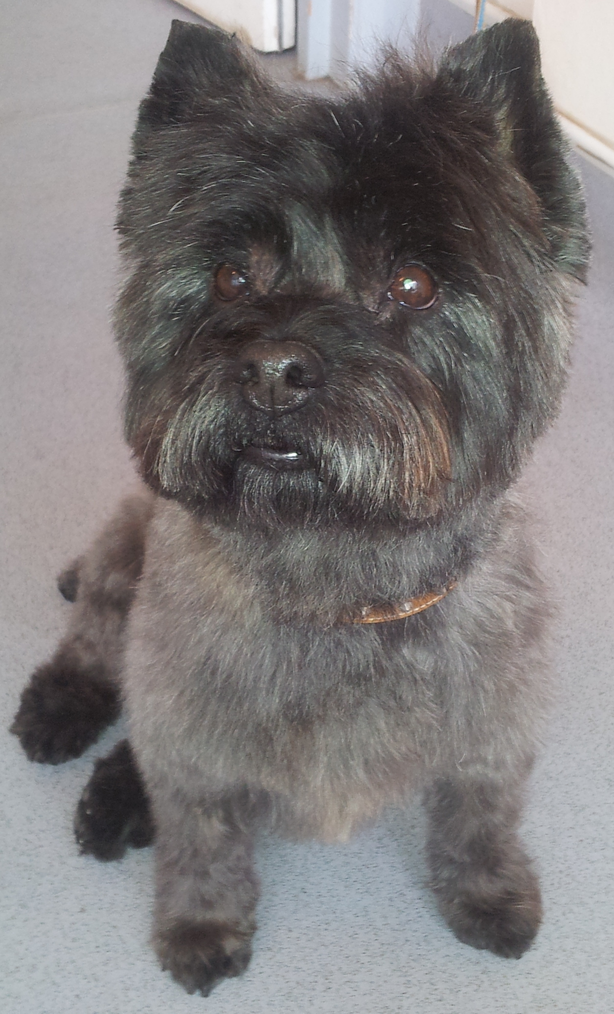 Dog Grooming Guildford