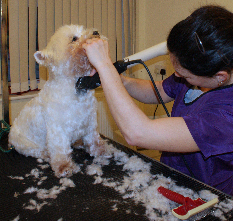Dog Grooming Room